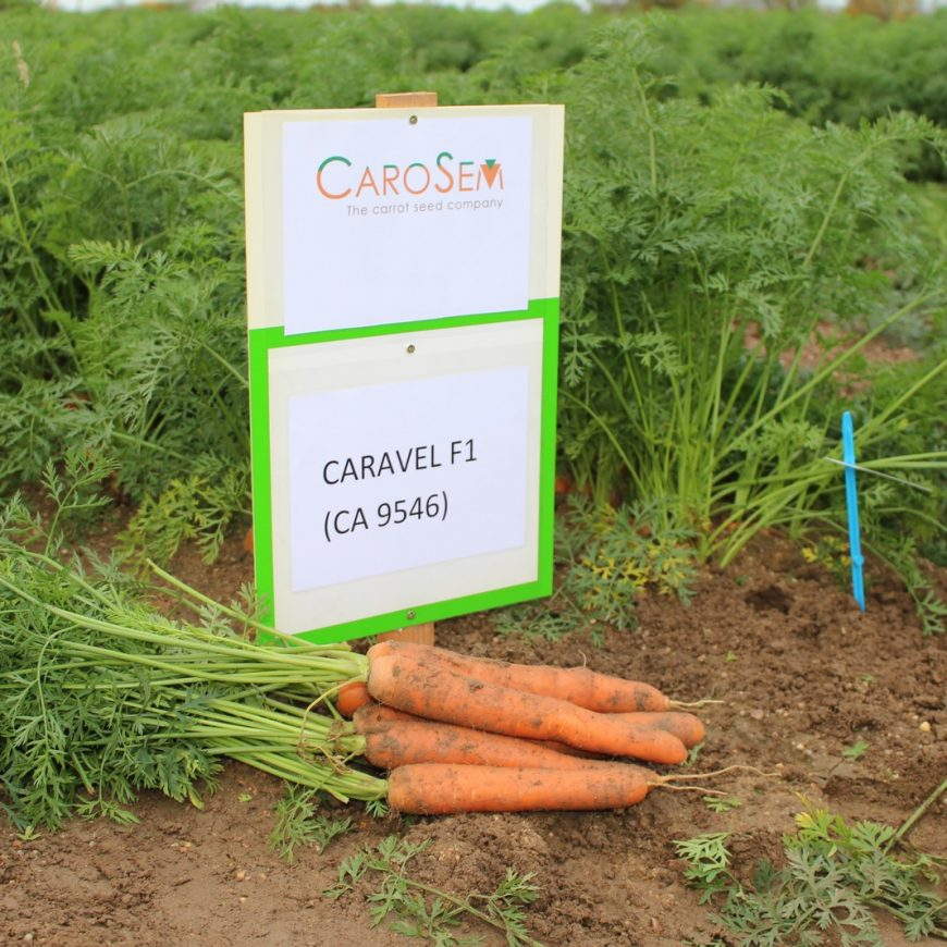 Carosem OPEN DAY 2018 France
